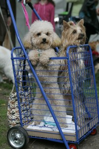 Dogs at Woofstock Toronto
