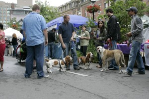 Woofstock at St. Lawrence Market
