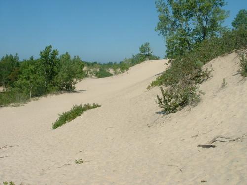 Sand Dunes at Dunes Beach, Sandbanks