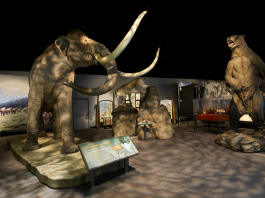 Mammoths and Mastodons at the Ontario Science Centre