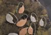 Large Modern Ulu Earrings in Bronze and Sterling Silver by Shelley MacDonald