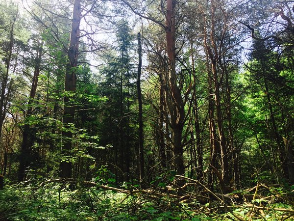iForest at The Wild Center in Tupper Lake, New York