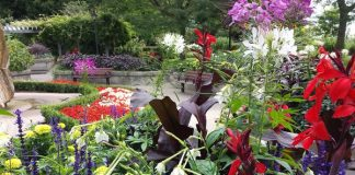 Gorgeous garden near rock waterfall at Rosetta McClain Gardens