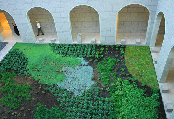 Soothing green space in a quiet courtyard at the National Gallery of Canada.