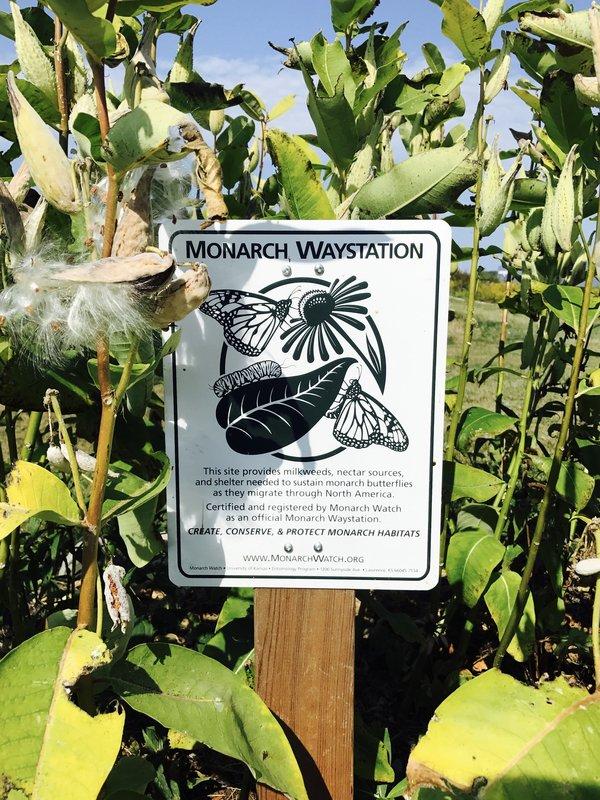 Monarch Waystation at Southbrook Vineyards