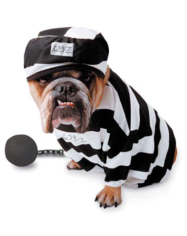 Prisoner Pet Costume at Spirit Halloween