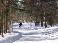 Cross Country Skiing at Horseshoe
