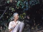 Jane Goodall with chimpanzee, courtesy Science Museum of Minnesota