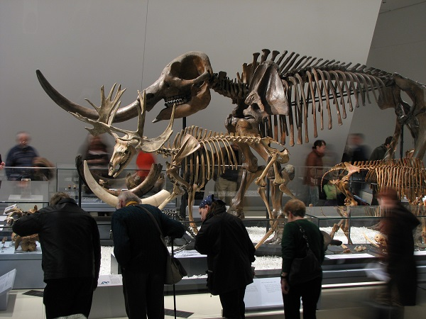 Reed Gallery of the Age of Mammals copyright Royal Ontario Museum