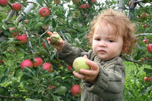 Apple picking, photo by Tim and Selena Middleton
