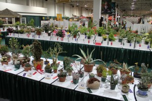 Plant varieties at International Home and Garden Show
