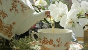 Mother's Day Tea at Toronto Botanical Garden