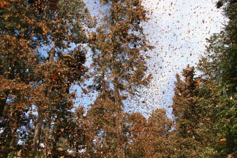 Flight of the Butterflies - Enchanted Butterfly Forest - SK Films