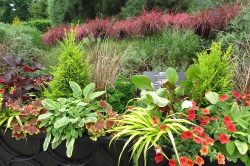 Flower garden at Toronto Botanical Garden