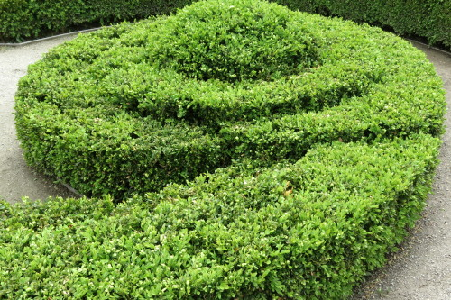 Pruned circular shrub at Toronto Botanical Garden
