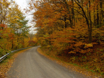 Fall Colours on the Niagara Escarpment, photo bgilliard