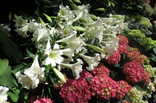 Easter lilies and hydrangeas