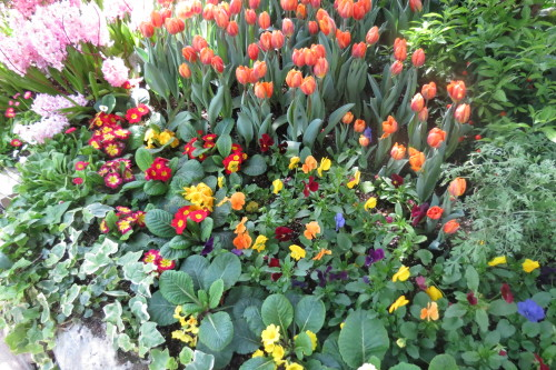 Hyacinths, tulips and pansies at Spring Flower Show