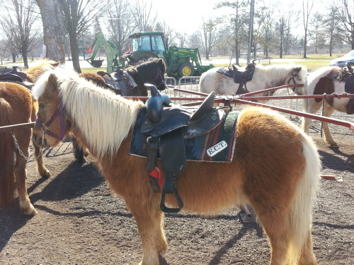 Pony rides at Bruce's Mill, photo Sharilene Rowland