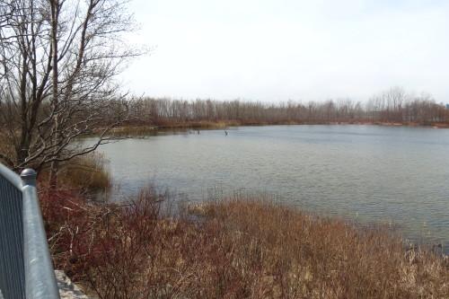Embayment D Coastal Wetland at Tommy Thompson Park