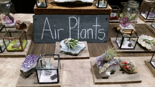 Air Plants at Canada Blooms 2016 in Toronto