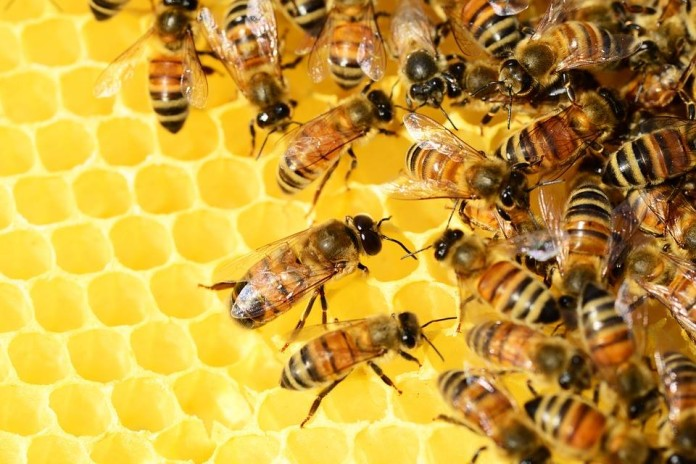 It requires 556 bees to make 1 pound of honey, photo Green Living Show