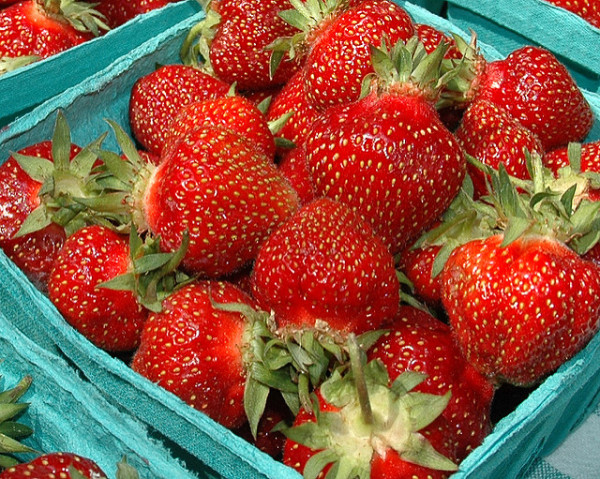 Pick your own strawberries in Toronto, photo David Flack, Flickr https://creativecommons.org/licenses/by/2.0/