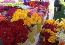 Flowers from pickOntario at North Toronto Floral Market