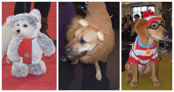 Halloween party at Purina PawsWay in Toronto