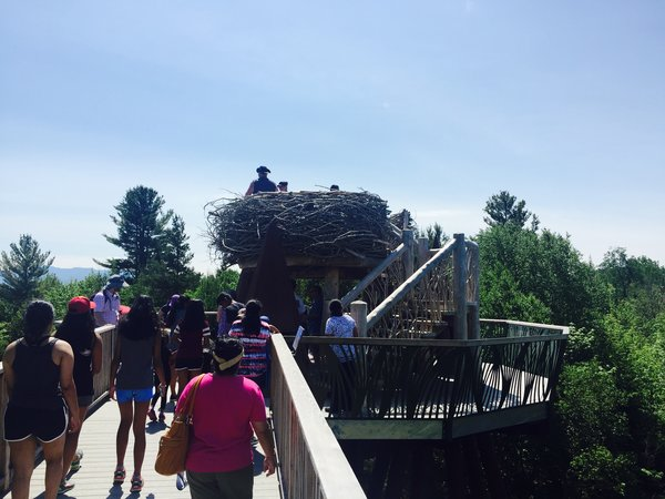 Eagle's Nest viewing deck on the Wild Walk at The Wild Center, New York