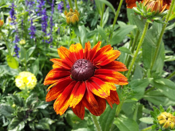 An orange, purple and yellow colour scheme at Rosetta McClain Gardens