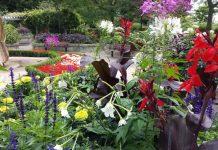 Gorgeous garden near rock waterfall at Rosetta McClain Gardens