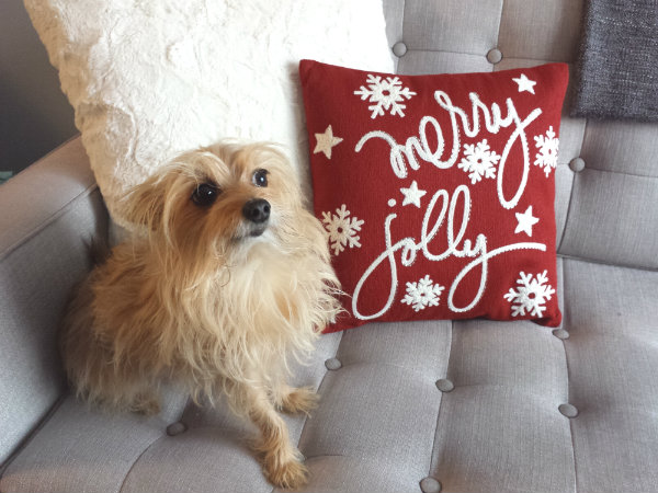 Cronus with Embroidered Merry Jolly Mini Pillow from Pier 1