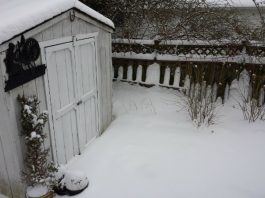 Snow in backyard in Dec. 2016.
