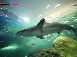 Dangerous Lagoon at Ripley's Aquarium in Toronto