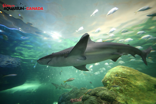 Dangerous Lagoon at Ripley's Aquarium in Toronto
