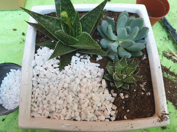 Applying the mini white stones on the soil in the planter at Plant Nite at Marche Restaurant.