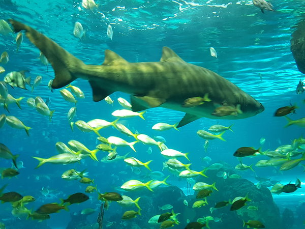 Ripley's Aquarium of Canada in Toronto
