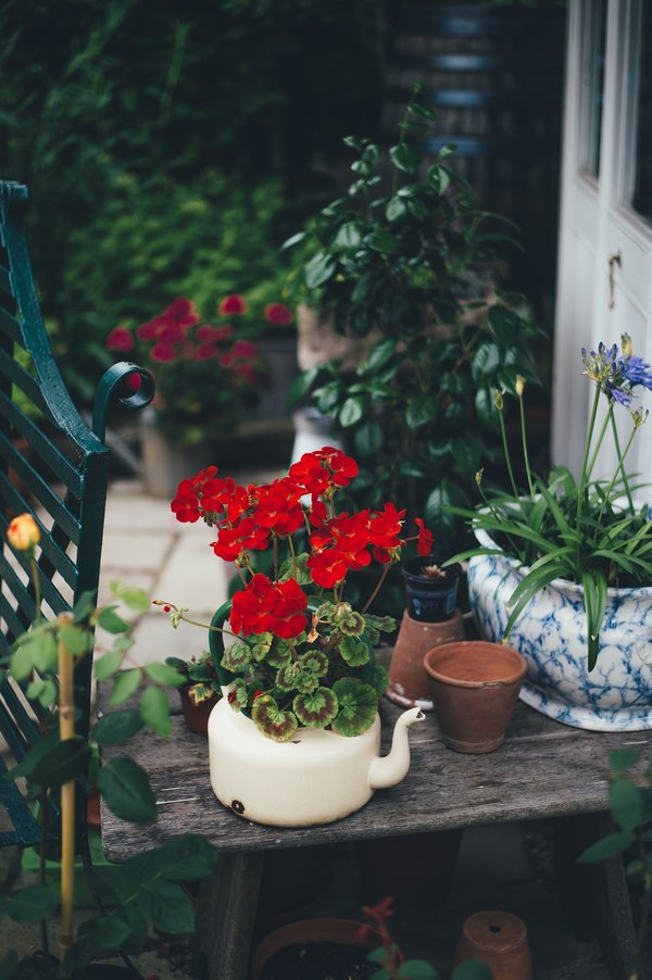 Garden pots placed together create a garden oasis, photo by Annie Spratt on Unsplash