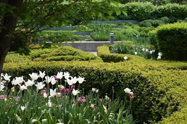 Beryl Ivey Knot Garden, Toronto Botanical Garden
