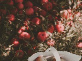 Apple picking near Toronto, photo rikki-austin-mA9awhajPQw-unsplash