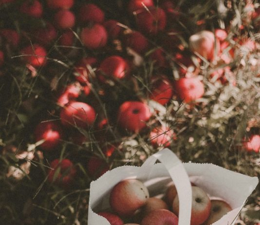 Apple picking near Toronto, photo rikki-austin-mA9awhajPQw-unsplash