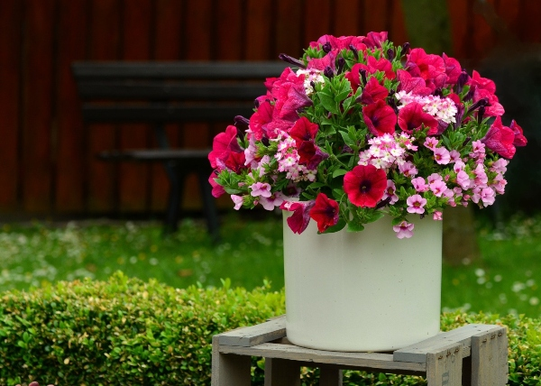 Choose different-sized flowers for your container garden, photo credit congerdesign on Pixabay