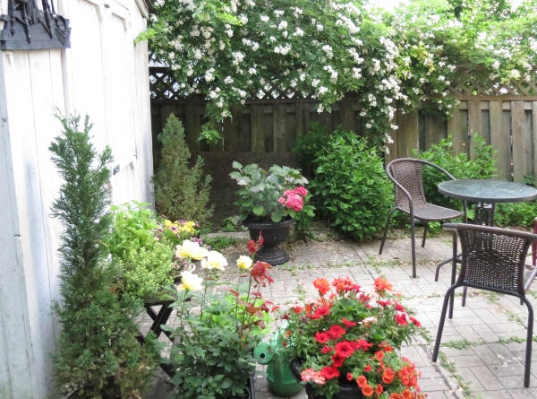 Our backyard with container gardening
